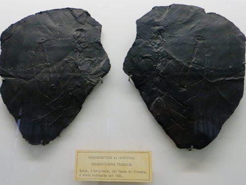 Il Pipistrello fossile di Monteviale … unico al mondo!